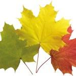 «Осень» Пальчиковые игры