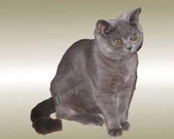 watermarked - котенок для Новогодней сказки 2